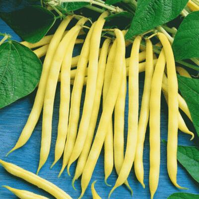 Beans - Yellow 1lb
