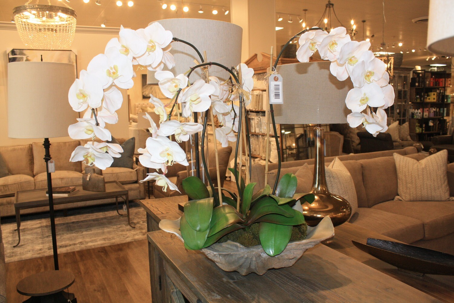 Orchid in Shell