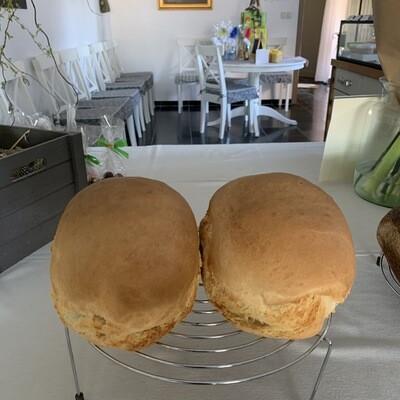 BIO wit brood