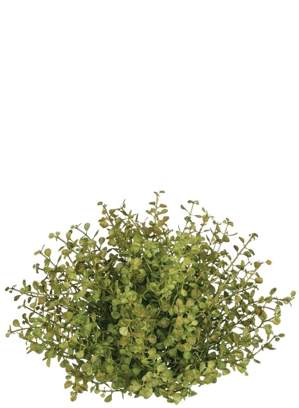 Baby Grass 1/2 Orb - LSUL