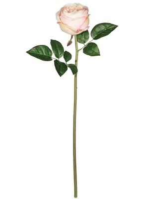 Cabbage Rose Stem - LSUL