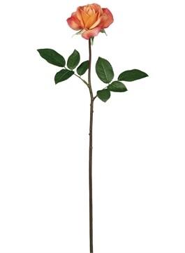 Peach Rose - LSUL