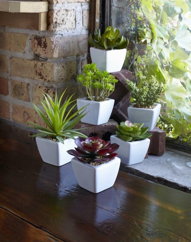 Succulent in ceramic - 2826 - HEM
