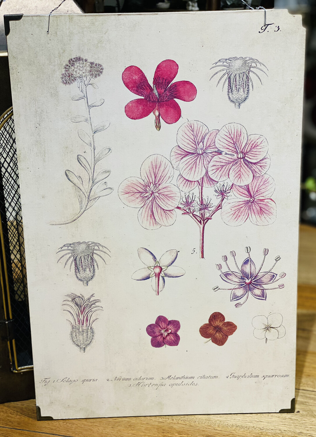 Wall Decor Wood With Pink and Red Botanicals - CHR