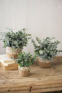 Eucalyptus Plants in Woven Pots - Small - 1414 - HEM