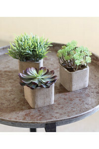 Succulents in square pots - 1402 - HEM