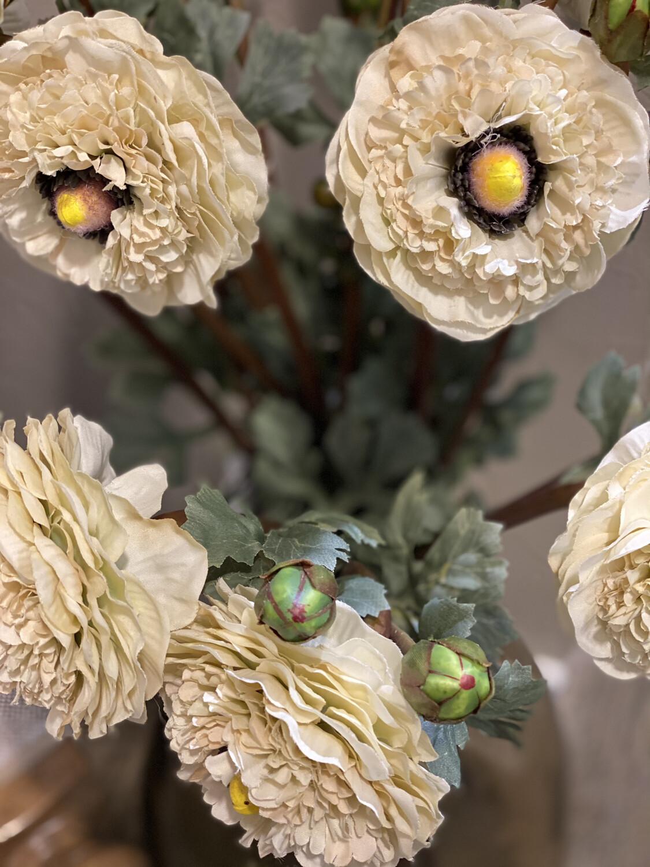 Cream Ranunculus - K&K