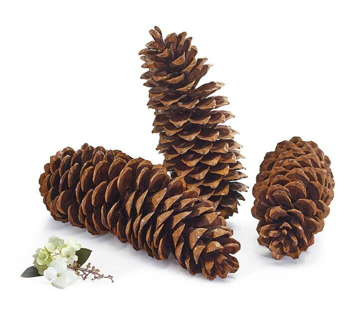 Pine Cone - 2604 - HEM