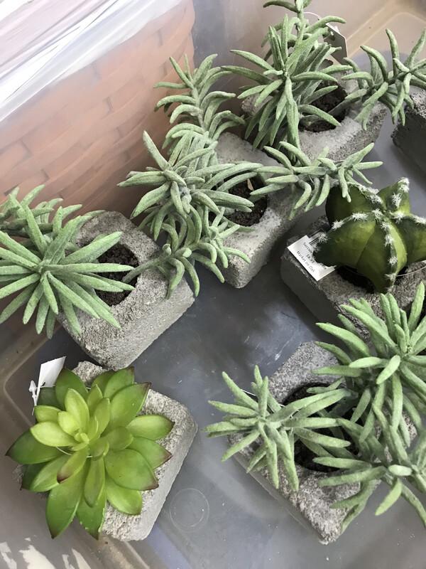 Concrete Succulent