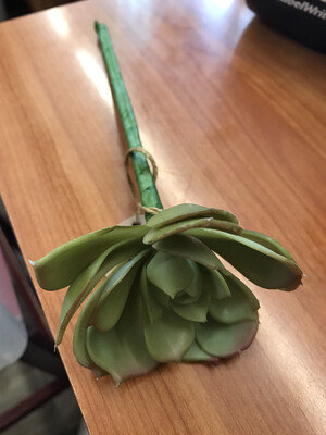 Succulent Stems