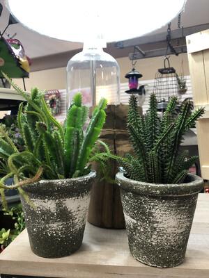 """10"""" Cactus Pot"""