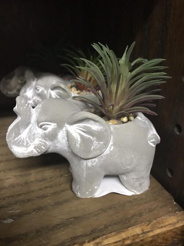 Animal Succulent
