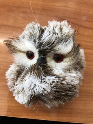 Floofy Owl