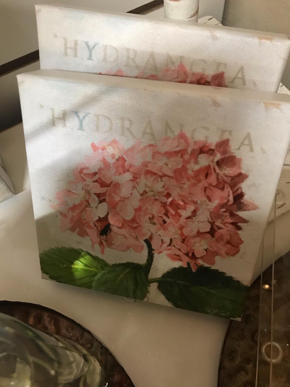 Giclee Canvas Hydrangea