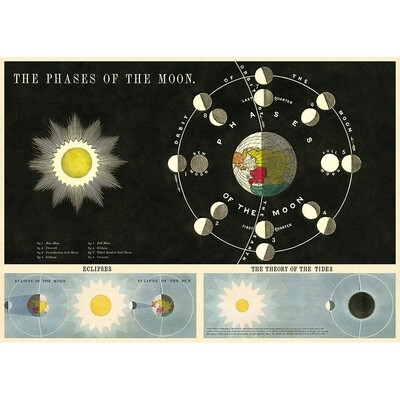Phases of the Moon Poster #214