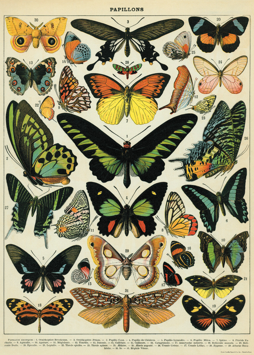 Butterflies Poster #304