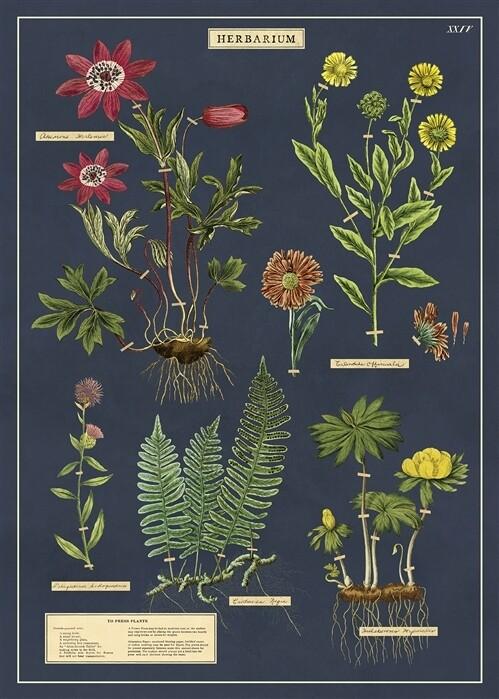 Herbarium Poster #111