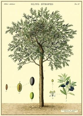 Olive Tree Poster #313