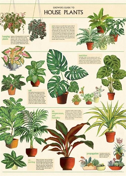Houseplants Poster #112