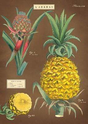 Pineapple Poster #316