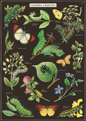 Caterpillars + Butterflies Poster #305