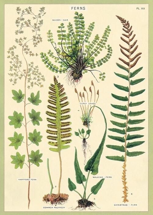 Ferns Poster #109