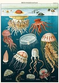 Jellyfish Poster #207