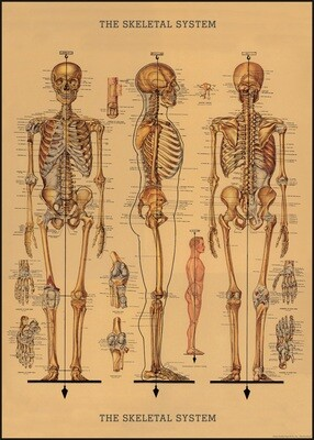 Skeletons Poster #211