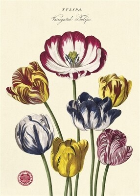 Tulips 2 Poster #118
