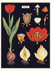 Tulips - Red + Black Poster #117