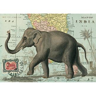 Elephant Poster #309