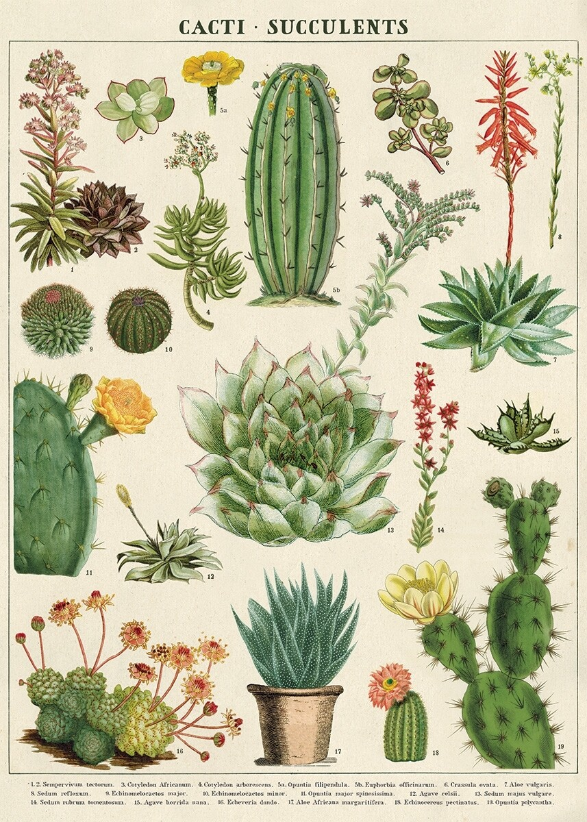 Cacti + Succulents Poster #106