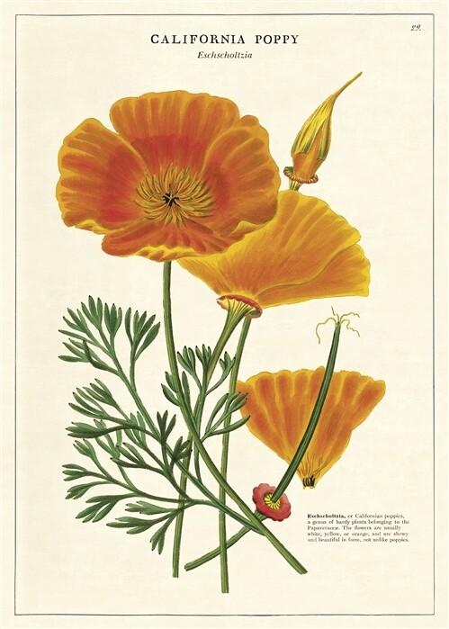 California Poppy Poster #107