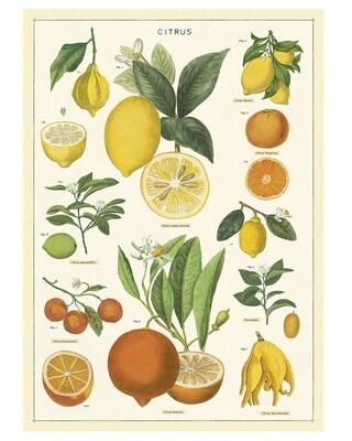 Citrus Poster #307