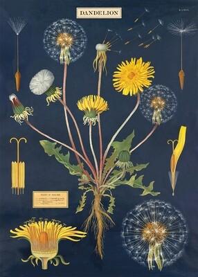 Dandelion Chart Poster #108