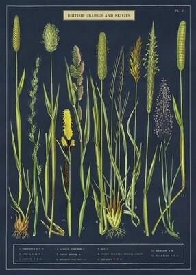 Grasses + Sedges Poster #110