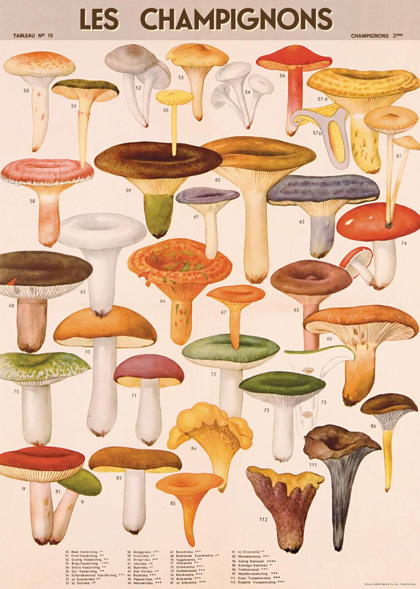 Mushrooms Poster #312