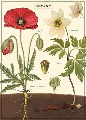 Red Poppy Botany Poster #104