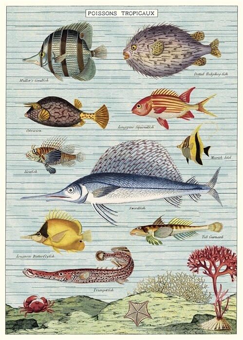 Tropical Fish Poster #317