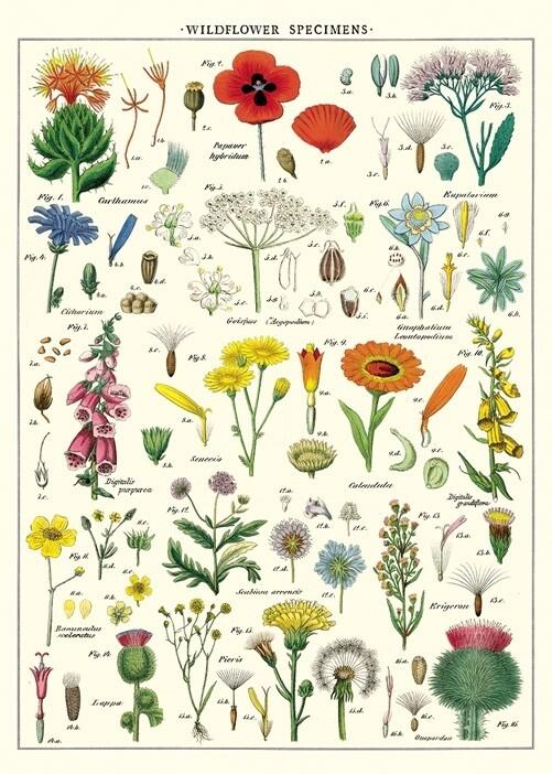 Wildflowers Poster #119
