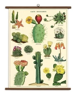 Cacti + Succulents Large School Chart