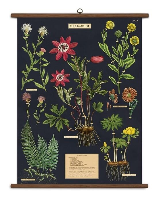 Herbarium Large School Chart