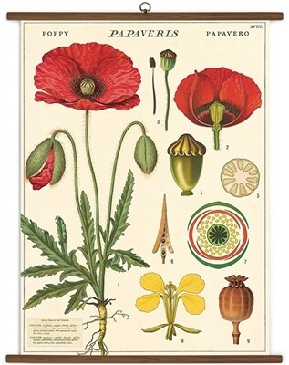 Poppy Botany Large School Chart