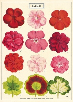 Fleurs Poster #116