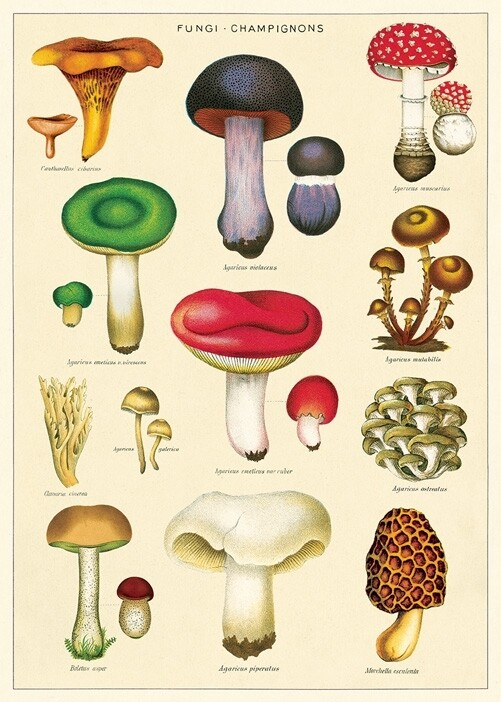 Mushrooms 2 Poster #319