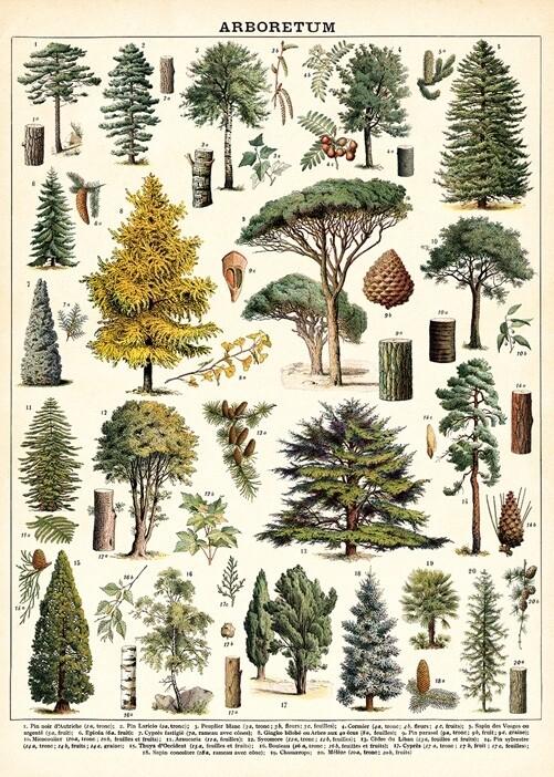 Arboretum Poster #318