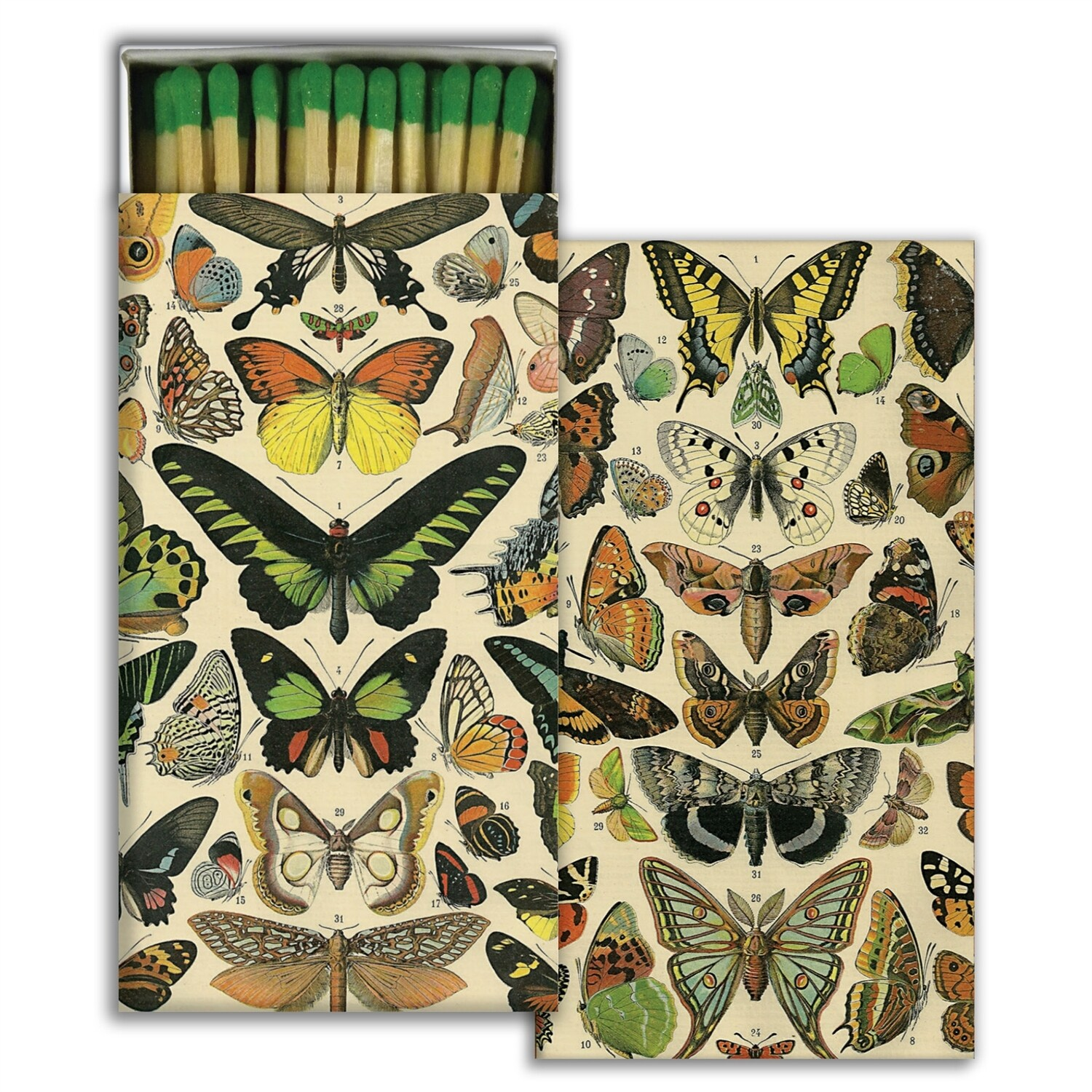 Butterfly Specimens Matches