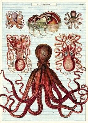 Octopods Poster #210