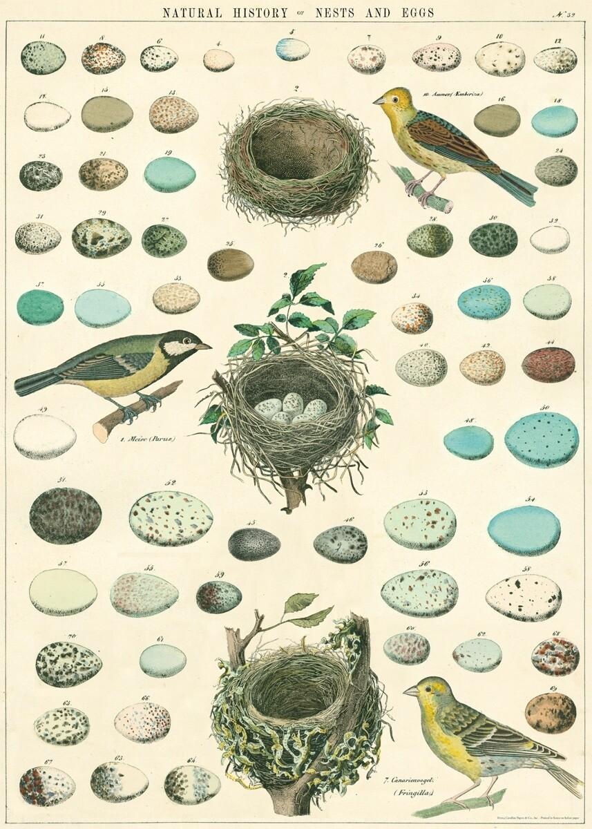 Birds, Nests + Eggs Poster #317