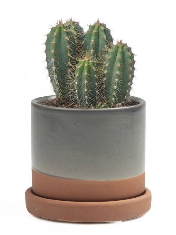 Chive Terracotta Minute 2 Ceramic Pot- MIPSTE